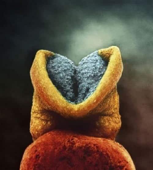 Embrionul uman de la concepere pana la nastere