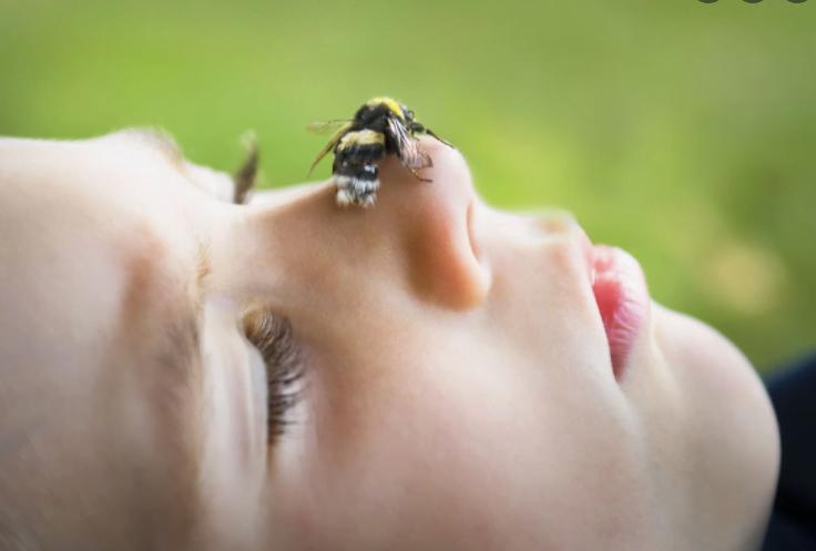 Ce trebuie să știi despre înțepătura de albină. Lucruri care vă pot salva viața, explicate de Dr. Tudor Ciuhodaru | Demamici.ro